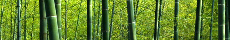DentalWellnessNature_Bamboo